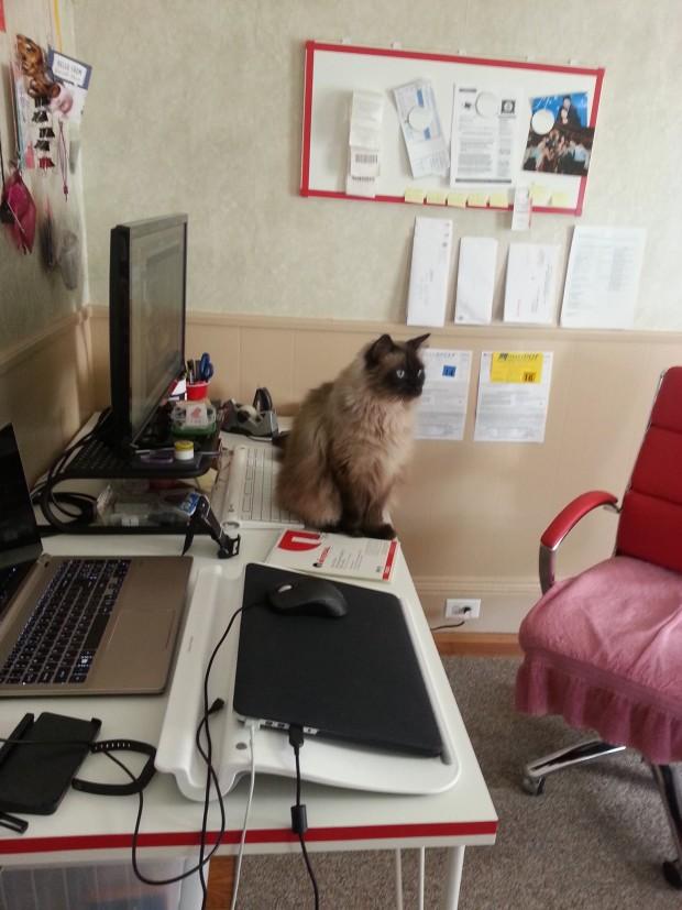 cat-no-work-allowed