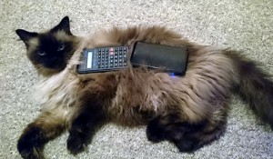 Calculator & 3DS on Cat