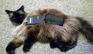 Calculator & 3DS on Cat