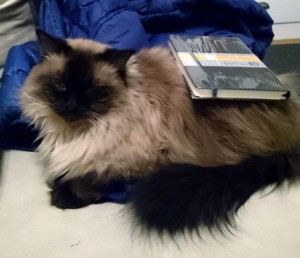 New Notebook on Cat